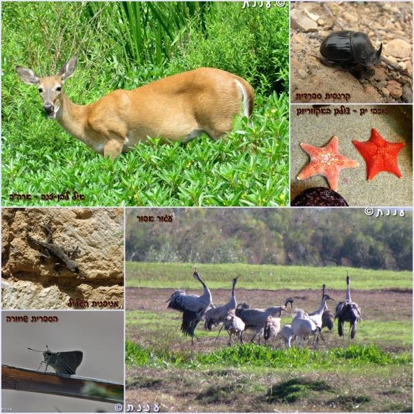 page_animals