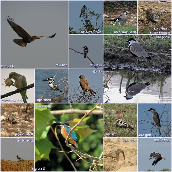 page_birds