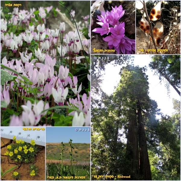 page_plants
