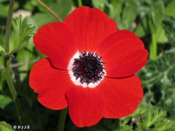 anemone10