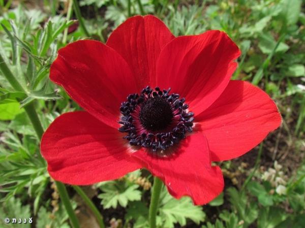anemone14