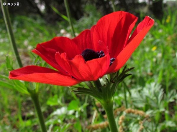 anemone15
