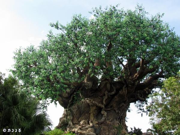 Tree of life1