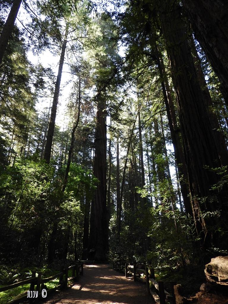 הטיול אל Henry Cowell Redwood StatePark
