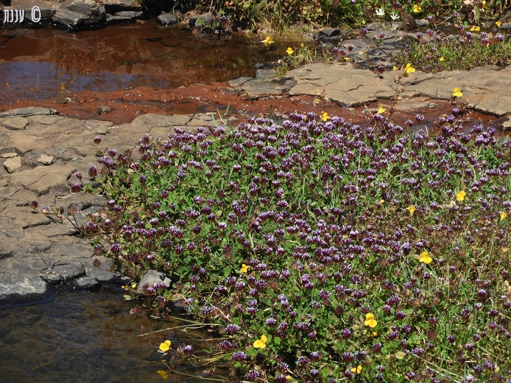 השמורה האקולוגית הר השולחן הצפוני – North Table Mountain EcologicalReserve