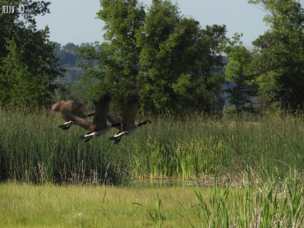Sacramento River Bend Outstanding NatureArea