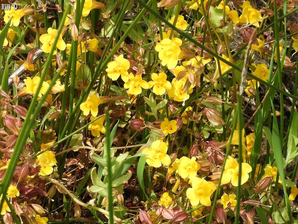 פרחים בפארק פינאקלס, חלקI